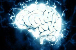 人間の脳の仕組み
